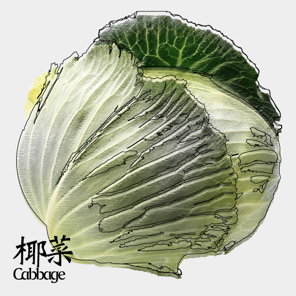 gm-cabbage