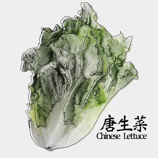 gm-chinese-lettuce