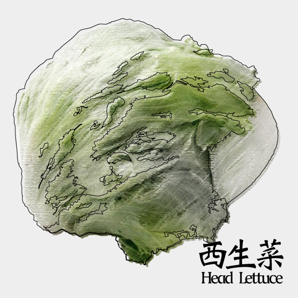 gm-head-lettuce